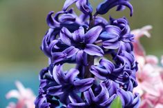 Spring 2015 is just 'round the corner at Hurst House Bed & Breakfast!