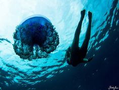 Hawaiian native Sarah Lee dives under the ocean's surface without any scuba gear to capture a stunning underwater world.