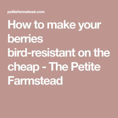 How to make your berries bird-resistant on the cheap - The Petite Farmstead