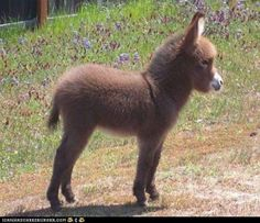 Baby burro! So fluffy!