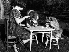 Tea time. A girl has tea with her pet dog and raccoon, Massachusetts, 1930