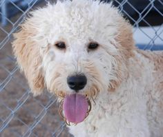 ADOPT- RESCUE-VOLUNTEER- FOSTER- National Mill Dog Rescue