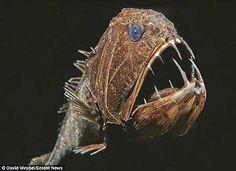 viperfish, deepwater fish