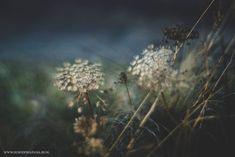Aminek poleca się na rabaty - Ogrodowa Pasja Dandelion, Flowers, Plants, Dandelions, Plant, Taraxacum Officinale, Royal Icing Flowers, Flower, Florals