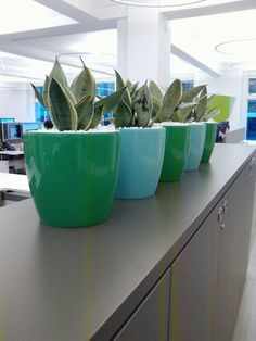 Plants and planters can look funky in your office