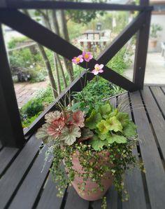 小さな庭の画像 by AKIさん | 小さな庭と斑入りワイヤープランツとディコンドラとカレックスとヒューケラとシュウメイギクと寄せ植えと秋の寄せ植えフォトコンテストと緑のある暮らしとガーデニングと秋の花