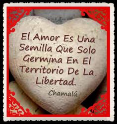 〽️El Amor...️Chamalu...