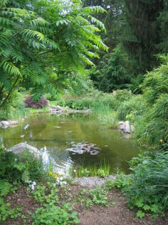 This is Pond, the main water source in A Land Of My Own. All water flows from Pond and back to Pond.