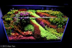 Spectacular Dutch style aquascape.