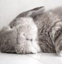 sleeping bunny via Classy Woman