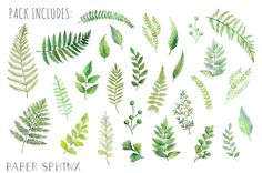 28 fern leaves, hand-painted in watercolors. Includes leaves, stems and branches in beautiful shades of green. The graphics are hi-res and perfect for both digital and print use. Use these elements for a wedding stationery, digital scrapbooking, event invitations, wall art, greeting cards, gift tags, party supplies, web sites, labels and more! -----DIGITAL INSTANT DOWNLOAD----- With Etsys Instant Downloads, you can download these files through your Etsy account as soon as payment is…