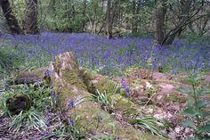 ecclesall-woods1.jpg 960×640 pixels