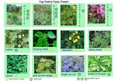 Tortoise weeds diet