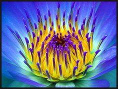 Viking flower
