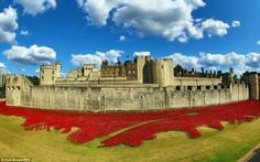 At the Tower of London red ceramic poppies are being planted to represent every killed soldier in the British Empire. Artist Paul Cummins was inspired by the battlefield accounts of an unknown soldier who died in Flanders. Every poppy is being handmade by team of at least 35 people and each takes around three days to create All flowers are to be sold off. This will raise millions to be split between six charities with links to Armed Forces