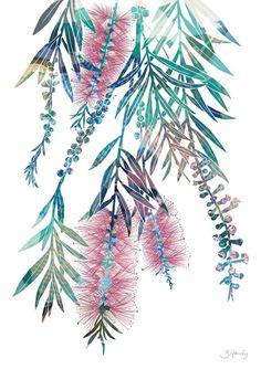 Pink bottlebrush print Aussie art Australian made flower Australian Painting, Australian Art, Australian Plants, Plant Illustration, Botanical Illustration, Watercolor Flowers, Watercolor Paintings, Abstract Paintings, Art Paintings