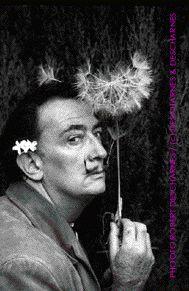 Port Lligat, 11 octobre 1959. Dali tenant la fleur de pissenlit: 'Je sème à tous vents', symbole de la connaissance, célèbre cigle des dictionnaires Larousse.