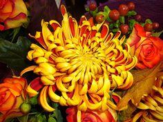 chrysanthemum   Chrysanthemum, Bouquet, Fall, Autumn