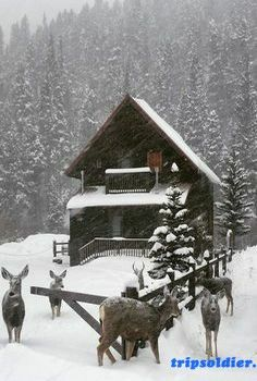 Cabin in the snow, nature, trees, deer Winter Cabin, Cozy Cabin, Log Cabin Homes, Log Cabins, Barn Homes, Winter Scenery, Little Cabin, Snow Scenes, Cabins And Cottages
