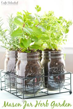 "How's this for a ""container"" garden?  	  	  	  	Here's what you'll need to get started:  	Pint Size Masons Jars. 	Vintage Style Mason Jar Holder. 	Plants/Herbs. 	Soil. Gather planting pointers for this project VIA Crafts Unleashed! 	  	MORE:  	The Best DIY Herb Garden Ideas on the Web  	3 Herbs Th..."
