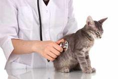 Le chat est sensible à la douleur comme nous le sommes. Mais ce qu'il y a de particulier au chat est la façon dont il exprime son mal.
