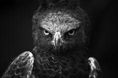 Angry Bird™