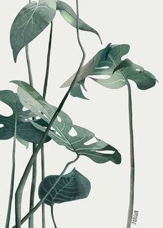 Montera leaves by Agata Wierzbicka, fine art print, limited edition
