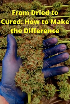 From Dried to Cured: How to Make the Difference