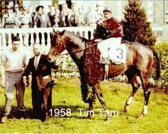 1958 winner of Derby and Preakness and finished a valiant second at Belmont after breaking his leg in the stretch. The Sport Horse Show and Breed Database. Loved this guy! Kentucy Derby, Preakness Stakes, Derby Winners, Tim Tam, Churchill Downs, Sport Of Kings, Thoroughbred Horse, Racehorse, Show Horses