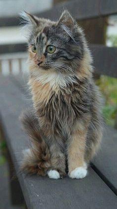 Cutest Kittens Ever, Cute Cats And Kittens, Newborn Kittens, Kitten Care, Beautiful Cats, Cat Lovers, Cute Animals, Kitty, Funny