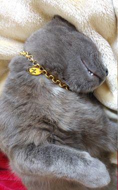 41 best cat collar cat accessories images on pinterest dog cat