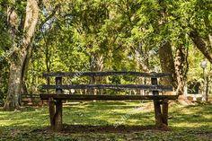 • Banco de madeira em um parque. http://www.shutterstock.com/pic-499344721  Portfólio completo na #Shutterstock: https://shutterstock.com/g/lefpic  #bench #park #flower #garden #forest #environment #nature #natural #beauty #photo #pic #instaphoto #instapic #photographer #photography #instaphotography #photooftheday #picoftheday #stockphoto #follow #lefpic #boanoite