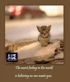 So true.  Adopt stray cats and dogs.