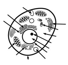 animal cell coloring page with labels