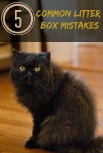 5 common litter box mistakes