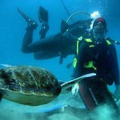 Reisebloggen Reisetid! #tenerife #travel #reise #dykking #dyve #turtle #sea