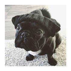 Beanie Boy ❤ French Bulldog