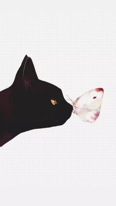 Black cat and a butterfly Wallpaper Gatos, Tier Wallpaper, Cat Wallpaper, Animal Wallpaper, Black Wallpaper, Butterfly Wallpaper Iphone, Drawing Wallpaper, Screen Wallpaper, Wallpapers En Hd