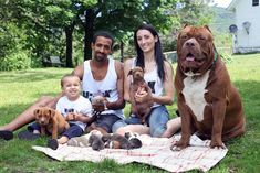Eight beautiful puppies were recently fathered by the world's largest pit bull, Hulk. Owned by Marlon and Lisa Grennan, founders of Dark Dynasty K9's in New Hampshire, USA, Hulk is being trained to be a protection dog. The puppies, if also trained to be elite protection dogs, could fetch up to $55,000 per pup