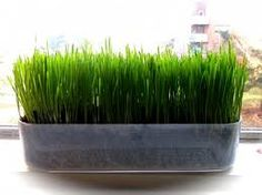again love the grass. center pieces. I'd tie a white ribbon around the base