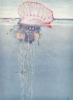 Jellyfish Art Print Portuguese Man-of-War by ParagonVintagePrints