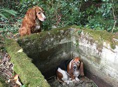 """""""O GRITO DO BICHO"""": Cadela que ficou ao lado de amiga em buraco é home..."""