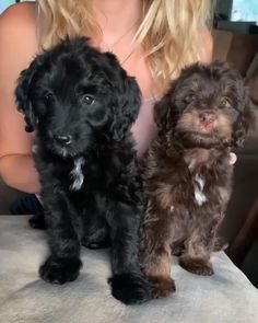 Bernedoodle Puppy, Goldendoodle, Funny Family, Family Dogs, Cute Baby Animals, Funny Animals, Funny Dogs, Cute Dogs, Workout Makeup