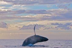 whale via - just breathe -