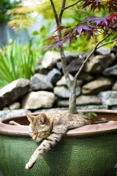 When a cat's tired, there's no telling where it will plop down for a nap.