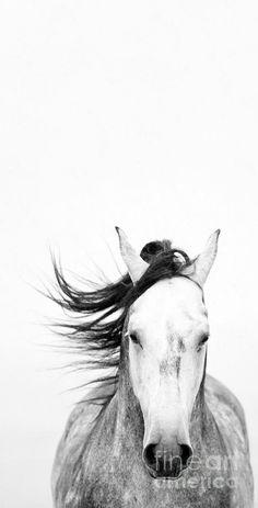 White Out Photograph - White Out Fine Art Print