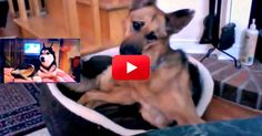 Too Cute! Check Out This German Shepherd's Hilarious Reaction to Mishka The Talking Husky! | The Animal Rescue Site Blog