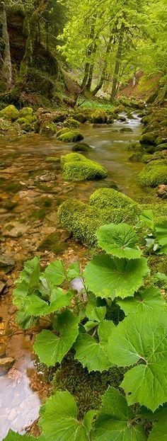 Reminds me of the childhood creek my Mama joyfully spoke of.  Swinging on grapevines.