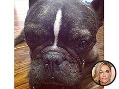 Chatter Busy: Denise Richards's Dog Dies