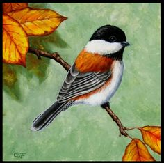 Autumn Chickadee--forestwildlifesart